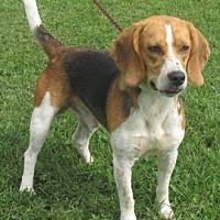 Adopt A Pet :: Rhett - Mount Sterling, KY