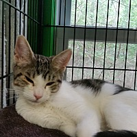 Adopt A Pet :: Trinity - Bloomingdale, NJ