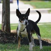 Adopt A Pet :: Vegas - Fairfield, OH
