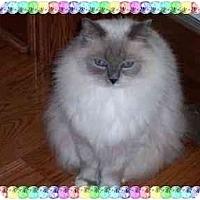 Adopt A Pet :: Kaeli - KANSAS, MO
