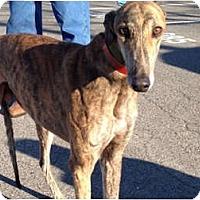 Adopt A Pet :: Hero - N. BABYLON, NY