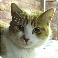 Adopt A Pet :: Wyatt - Chesapeake, VA