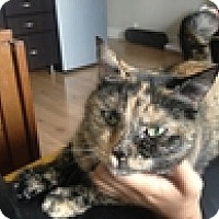 Adopt A Pet :: Allegra - Vancouver, BC