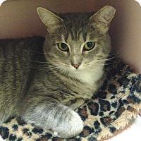 Adopt A Pet :: Minnie - Monroe, NC
