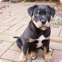 Adopt A Pet :: Frank - Surrey, BC