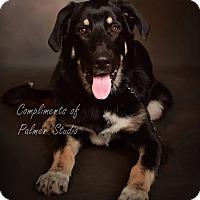Adopt A Pet :: Clifford - Green Cove Springs, FL