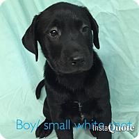 Adopt A Pet :: Faulkner - Cumming, GA