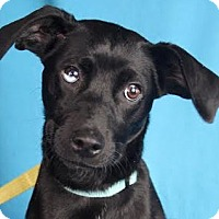 Adopt A Pet :: Danica - Minneapolis, MN