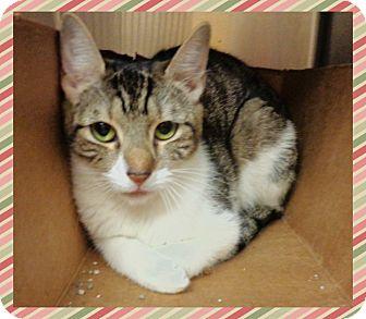 Domestic Shorthair Cat for adoption in Marietta, Georgia - MIRIA