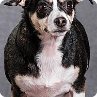 Adopt A Pet :: Maggie - Owensboro, KY