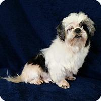 Adopt A Pet :: Vinny Miller - Urbana, OH