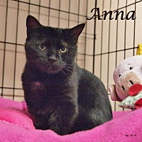 Adopt A Pet :: Anna - Ocean City, NJ