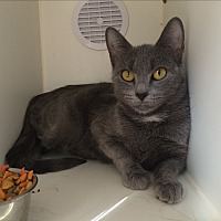 Adopt A Pet :: Onya - Middletown, NY