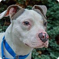 Adopt A Pet :: MANNY - Pittsburgh, PA