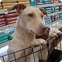 Adopt A Pet :: Baby - Frisco, TX