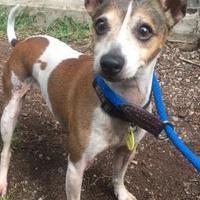 Adopt A Pet :: Sparky - South Burlington, VT