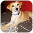 Photo 1 - Whippet/Feist Mix Dog for adoption in Latrobe, Pennsylvania - Bobby Lee