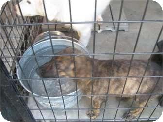 Labrador Retriever/Catahoula Leopard Dog Mix Dog for adoption in Henderson, North Carolina - Parker