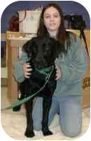 Labrador Retriever Dog for adoption in Warren, New Jersey - Horton
