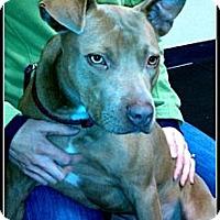 Adopt A Pet :: Bacchus - PENDING - kennebunkport, ME