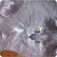 Adopt A Pet :: Ashley - cincinnati, OH