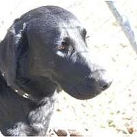 Adopt A Pet :: Jake - New Boston, NH