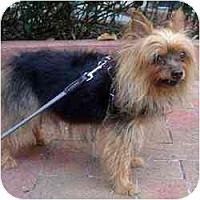 Adopt A Pet :: Wrigley - Tampa, FL