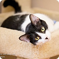 Adopt A Pet :: Shiloh - Fountain Hills, AZ
