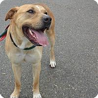 Adopt A Pet :: Sunny - Meridian, ID