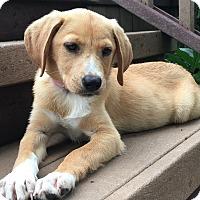 Adopt A Pet :: Lindsay - Sagaponack, NY