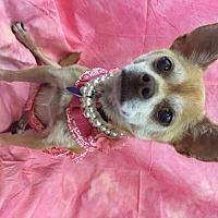 Adopt A Pet :: Cinnamon - Lake Elsinore, CA