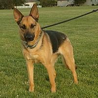Adopt A Pet :: Stasha - Kouts, IN