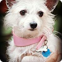 Adopt A Pet :: Zanny - Tijeras, NM
