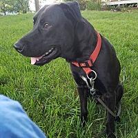Adopt A Pet :: Sam - Southbury, CT