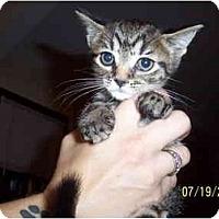 Adopt A Pet :: Laverne - Cleveland, OH