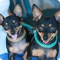 Adopt A Pet :: Mia - Canoga Park, CA