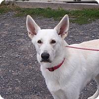 Adopt A Pet :: ZOE - Tully, NY