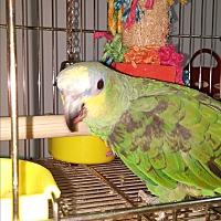 Adopt A Pet :: Brutus - Lenexa, KS