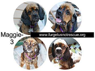 Cocker Spaniel Mix Dog for adoption in Hazel Park, Michigan - Maggie
