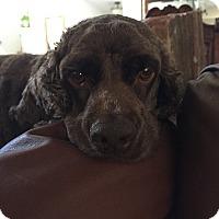 Adopt A Pet :: TRIPPER & Sassy - Toluca Lake, CA