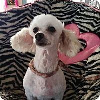 Adopt A Pet :: Buttermilk - Crump, TN