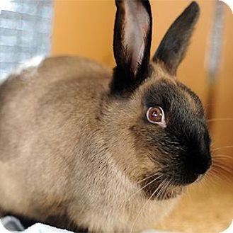 American for adoption in Kanab, Utah - Fauna