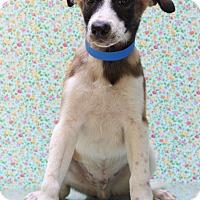 Adopt A Pet :: E.T. - Waldorf, MD