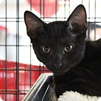 Adopt A Pet :: Taki - Sarasota, FL