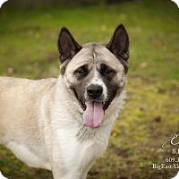 Adopt A Pet :: Echo - Toms River, NJ