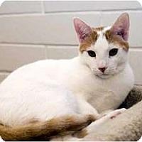 Adopt A Pet :: Yogi - New Port Richey, FL