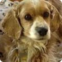 Adopt A Pet :: Sophia 2 - San Diego, CA