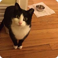 Adopt A Pet :: Boston - Chicago, IL