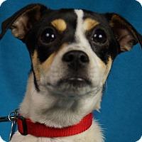 Adopt A Pet :: Arden - Minneapolis, MN