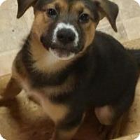Adopt A Pet :: Honor - House Springs, MO